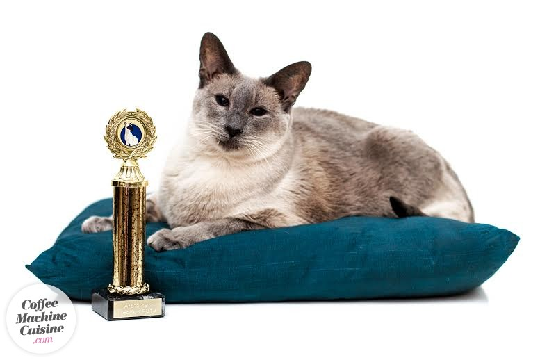 cat of the year 2013